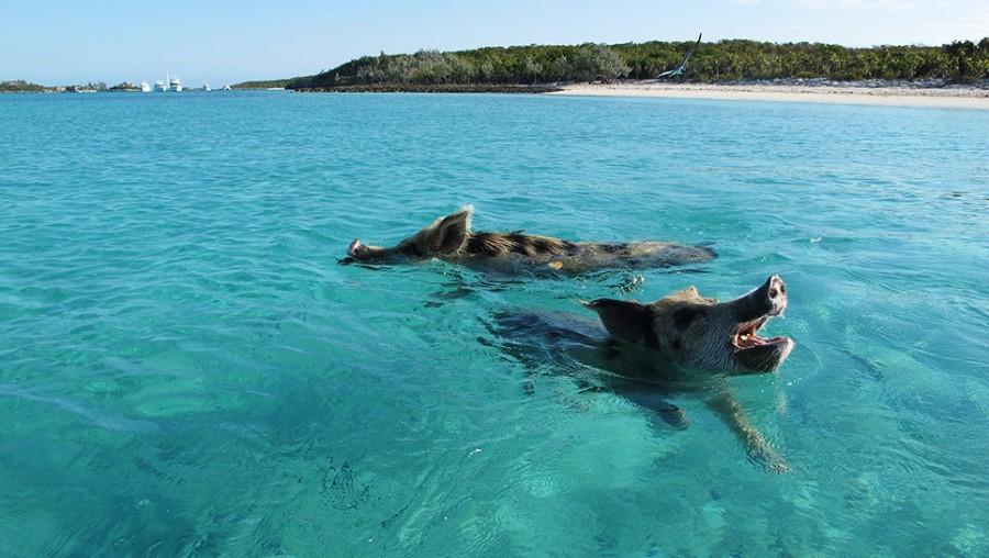 De 10 Mest Us 230 Dvanlige Strande I Verden Rejsehjaelp Dk